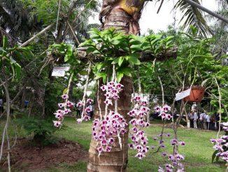 hương vani – đột biến của thập hoa) đều rất dễ trồng, dễ cho hoa nên được nhiều người lựa chọn trồng trong vườn nhà.