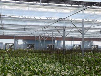 nhà màng trồng lan